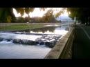 Белая цапля обнаружилась сегодня ранним утром в реке Сочи