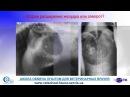 Основные осложнения в общехирургической практике мелких домашних животных: абдоминальная хирургия. Часть 3