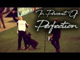 In Pursuit Of Perfection Dog Sport Inspiration Motivation Video WUSV 2017 Compilation