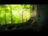 Кельтская музыка Летний дождик Sleep Music Relax