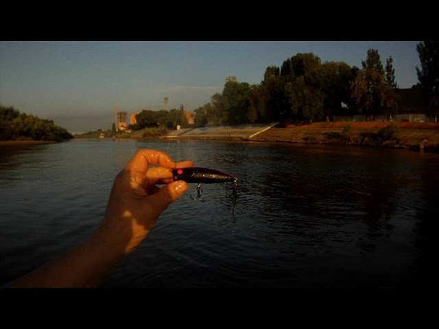 Ловля жереха на поппер DEPS Pulsecod Rattle In.Asp Topwater Fishing.