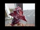 Первый осенний заморозок. Замерзшая роза./ First autumn frost. Frozen rose.