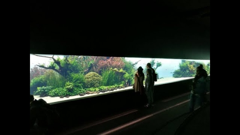 Лиссабонский Подводный Лес Такаши Амано