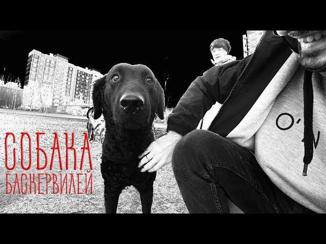 Собака Баскервилей vs Хаски Капелла. Гуляем по новому району