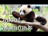 All About Mammals for Children Cats, Bears, Elephants, Pandas and More - FreeSchool