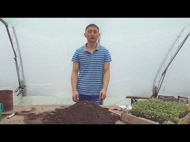 Минимум о рассаде капусты. Как вырастить качественную рассаду капусты начиная ...