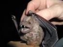 Жизнь отвратительных животных \ Discovery Channel