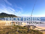 Tricky Fishies All Day Long!