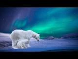 Polar Bear Aurora Borealis Landscape LIVE Acrylic Painting Tutorial