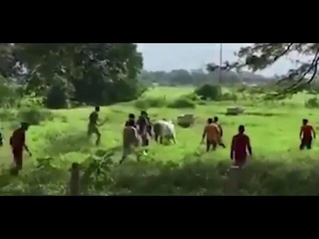Смотря в будущее. Охота на корову в Венесуэле, нефтяные запасы №1 в мире.
