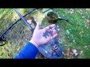 Крестовое место фильм 2.Осенний коп 2017.Поиск старины,монет.С металлоискателем АКА беркут 5