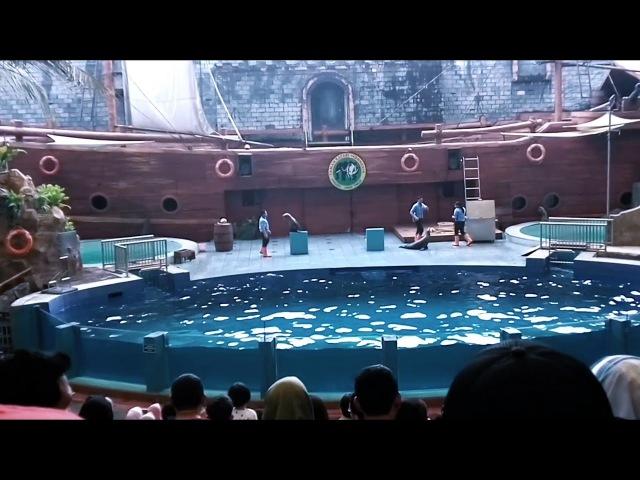 Atraksi Anjing laut di Taman Safari Prigen Pasuruan Jawa Timur  My Heart Will Go On remix dangdut