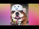 Смешные и милые щенки. Смотри и улыбайся!