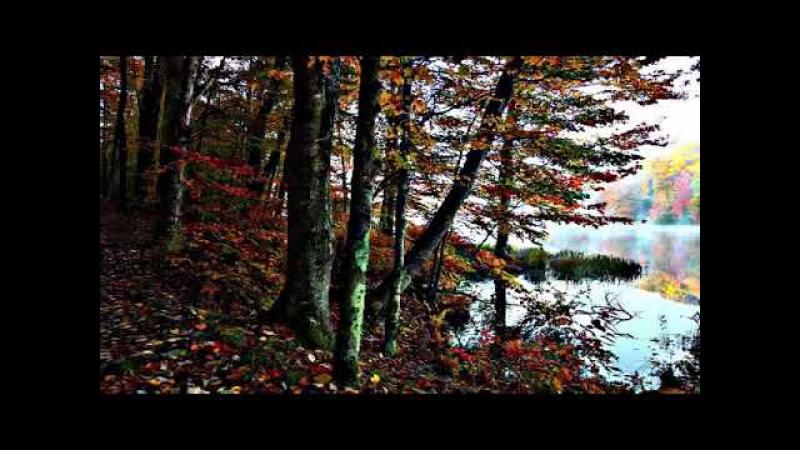 (Очень Красиво) пение птиц, звуки природы живой лес, хорошее настроение слушать