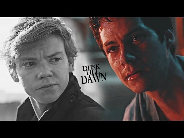 Thomas and Newt • Dusk till dawn