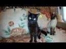 Играю с кошками.Замедленная съемка 1080 120 fps