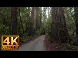 Howland Hill Road - 4K Forest Scenic Drive in Redwood &amp Piano Music