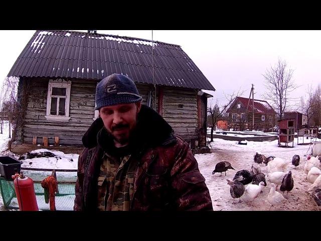 Любительский забой и разделка свиньи Из города в деревню