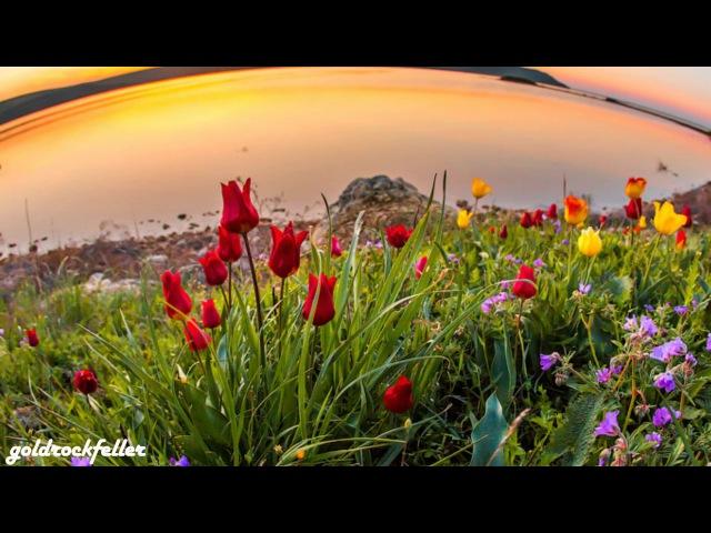 Цветение диких тюльпанов в Крыму (инструментальная музыка - свирель)