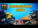 Подводный Мир. Египет. Шарм ель Шейх. Красное море. Съемка Go Pro под водой.