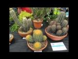 Brirish Cactus and Succulent National show