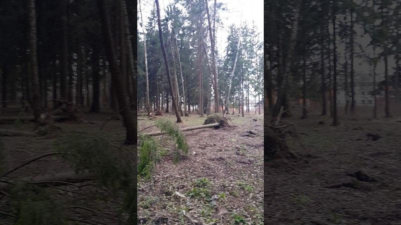 Скоро совсем леса не останется =(