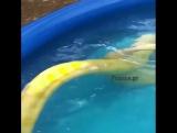 Поплавали бы с милой змейкой?