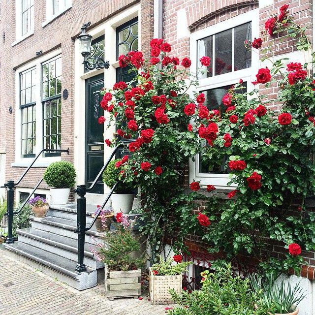 Петербург: Амстердам + Антверпен в одной поездке всего за 8800 рублей туда-обратно