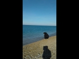 Я и море!... Любимовка... 2 января 2018 год.