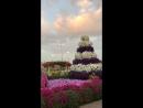 Сад цветов в Абу Даби, 14.12.2017