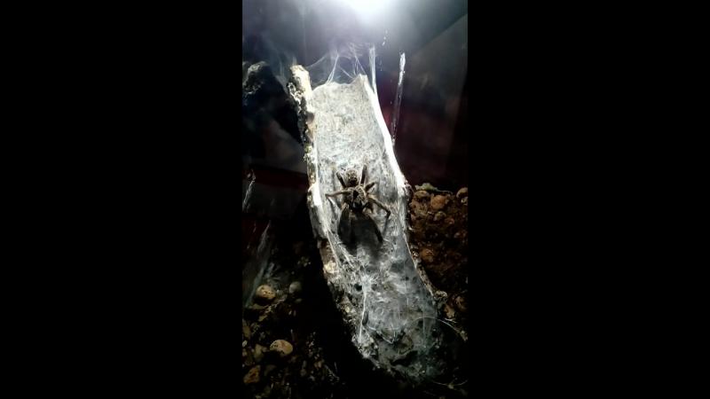 Фантастика Смотришь паук а повернется страшный человечек с рожками