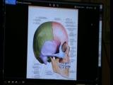 Анатомия и биомеханика региона голова - шея. День1 ч. 3
