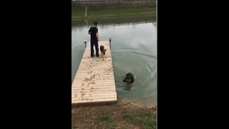 Неуклюжий пес дважды упал в воду