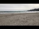 Хочу так же гулять у моря с собакой