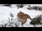 Котики на прогулке по Резиденциям «Сколково»