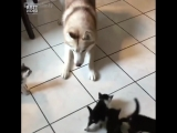 Знакомство с котятами