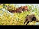 Невероятная Атака Диких Животных Ягуар Обезьяна Лев Тигр Крокодил Питон Full