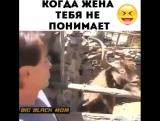 Когда жена тебя не понимает)