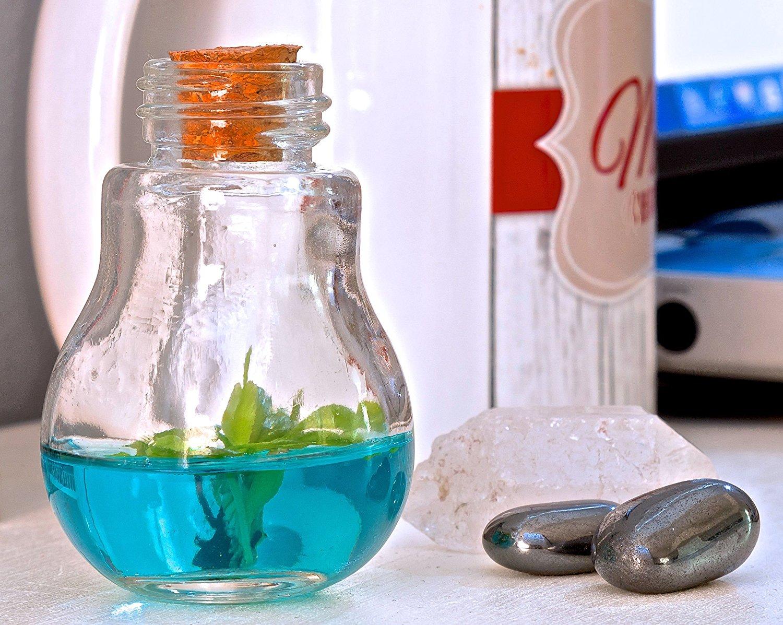 Мухоловка или venus flytrap в бутылке EeRmif7SrI0