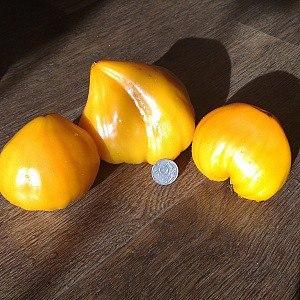 """В коллекции нашего интернет магазина """"Семена и саженцы От Сидоркина"""" около 300 сортов экзотических и редких сортов томатов."""