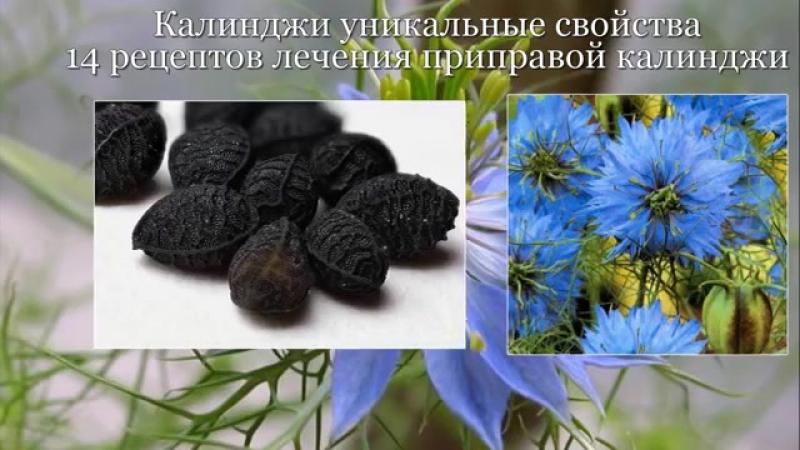 Калинджи уникальные свойства черного тмина, чернушки, нигеллыю 14 рецептов