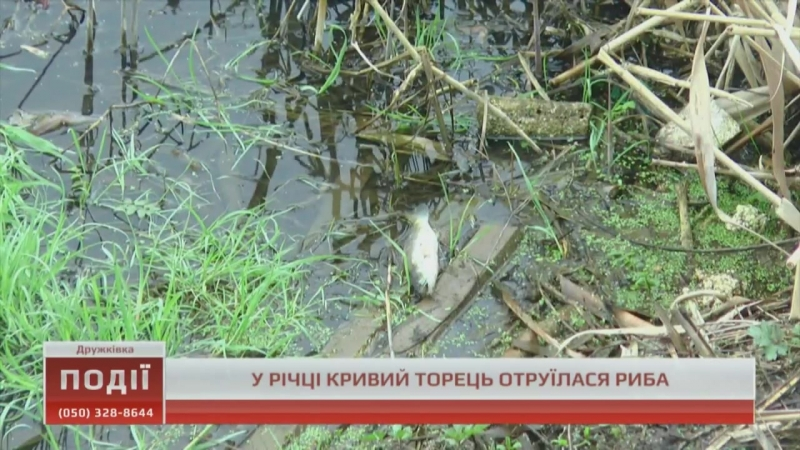 У річці Кривий Торець отруїлася риба