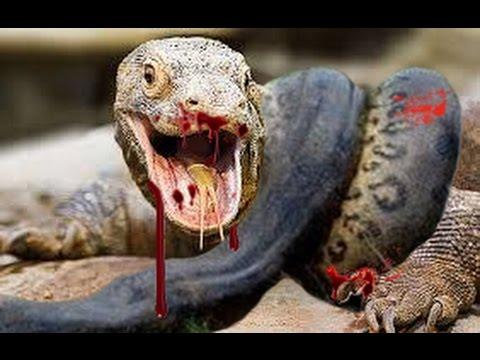 Ataques Mortais - Dragão de Komodo x Mamba Negra | Luta entre dragões e Pintinho Herói