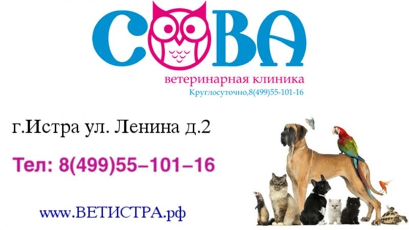 Круглосуточная ветеринарная клиника в г.Истра!!