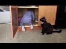 Супер кот Смешное видео про котов