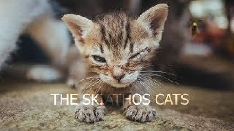 The Skiathos Cats