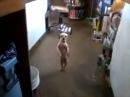 Самая смешная танцующая собака в мире чик чики бум