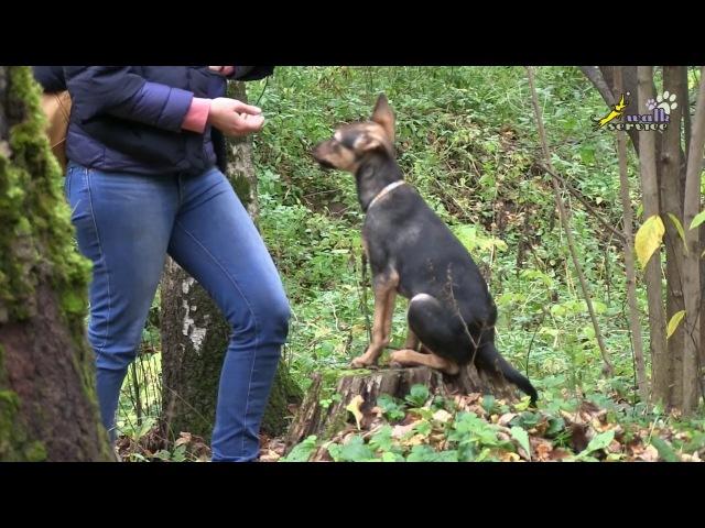 Кормление, внимание, позитивное ожидание (фаза выпрашивания) дрессировка собак