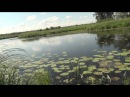 Лесное озеро и бешеный клёв краснопёрки