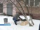 Домики для кошек появляются в ростовских дворах